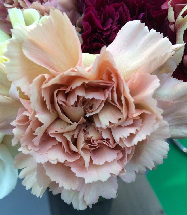 Visiting IFTF in Holland  Flirty Fleurs The Florist Blog