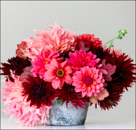 Flirty Fleurs Sorbetto Dahlia Collection with Longfield Gardens - Dahlia Tubers for Sale