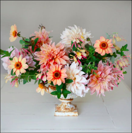 Flirty Fleurs Verona Dahlia Collection with Longfield Gardens - Dahlia Tubers for Sale
