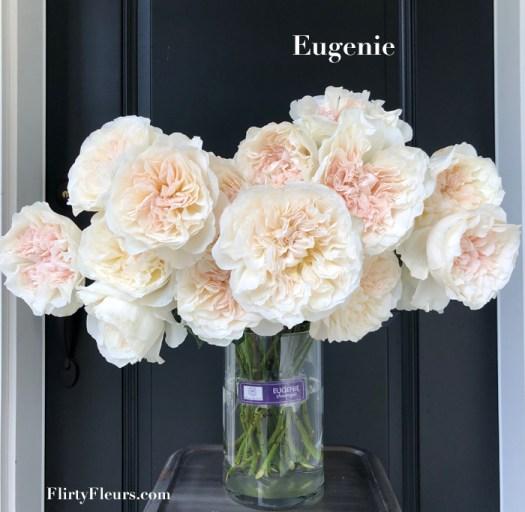 Flirty Fleurs Rose Study - David Austin Eugenie Garden Rose - Alexandra Farms