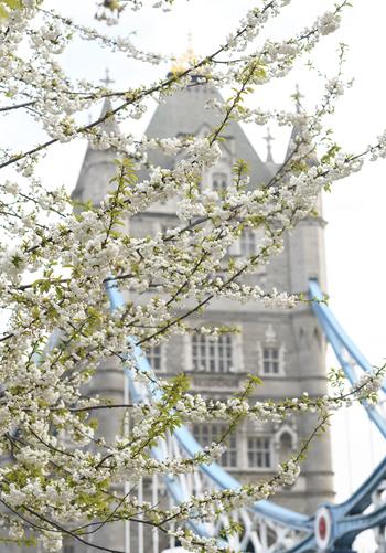 London in Bloom Georgianna Lane Tower Bridge