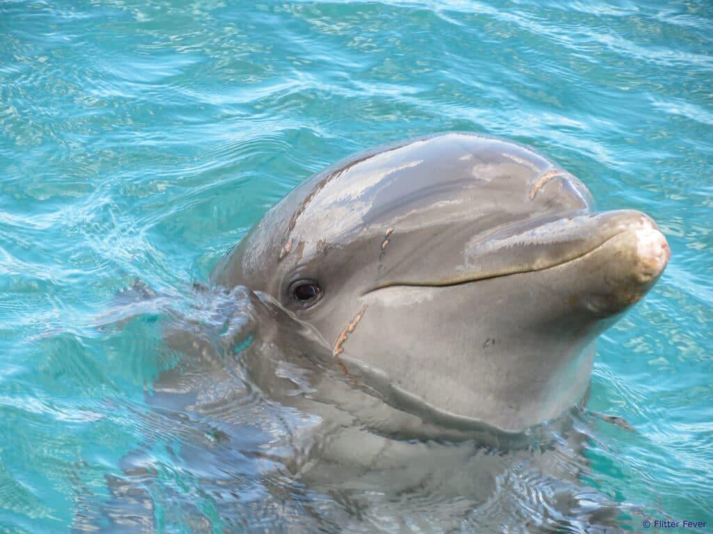 Dolphin Curacao