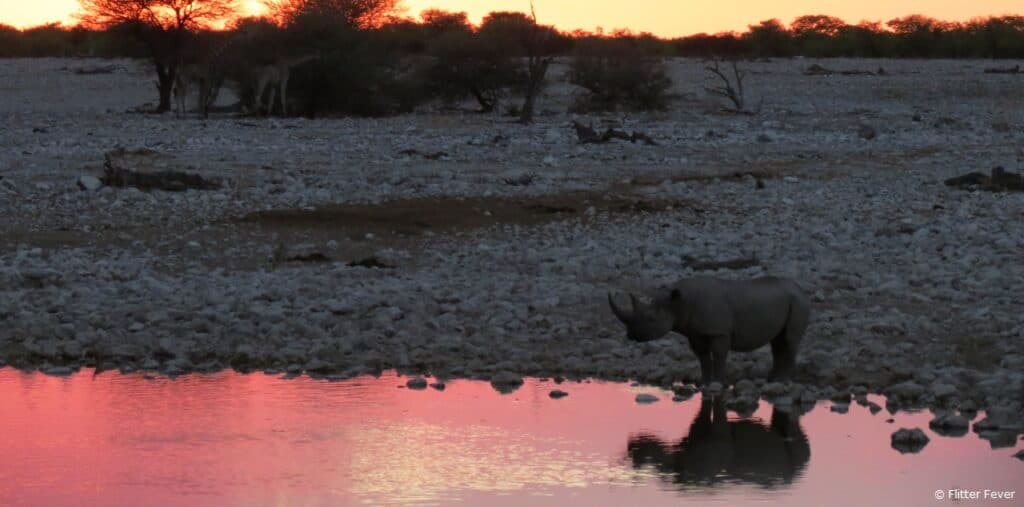 Rhino and pink sky Okaukeujo Camp waterhole Etosha Namibia