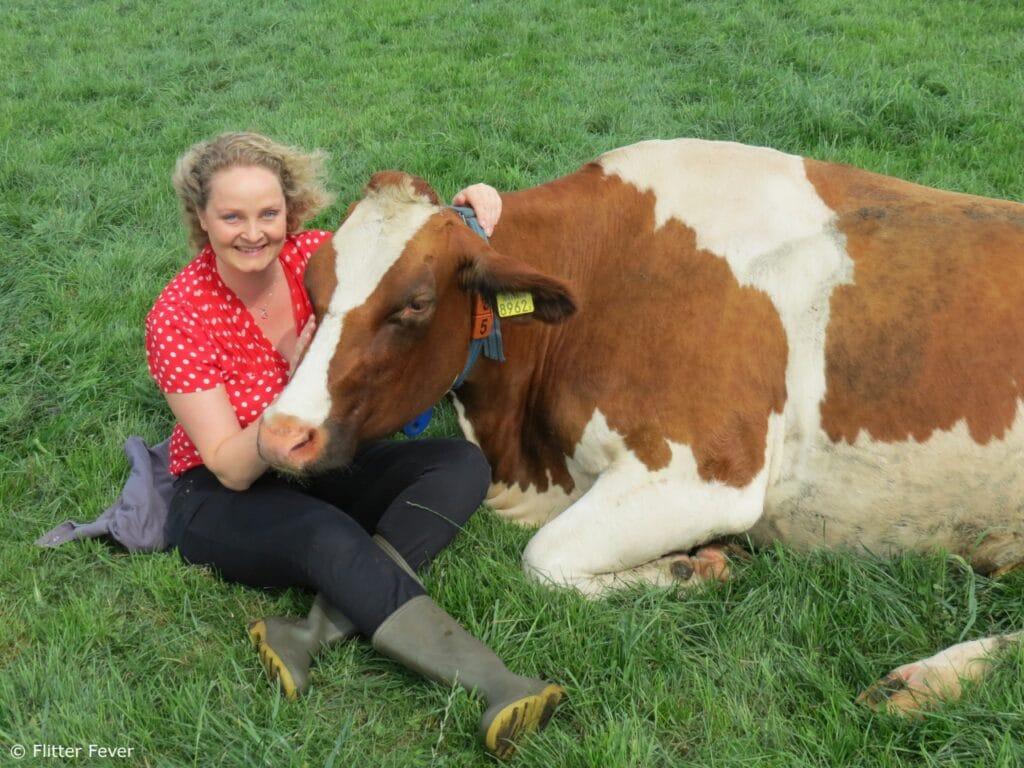 happy time cow cuddling hugging koeknuffelen koe nederland netherlands beets holland