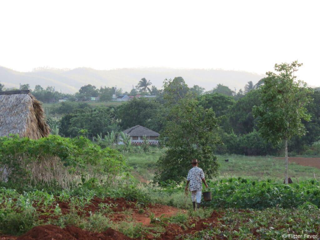 Cuban farmer walking on his land Vinales Cuba