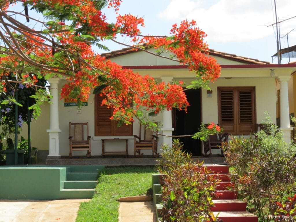 Beautiful orange tree in front of house in Vinales Cuba