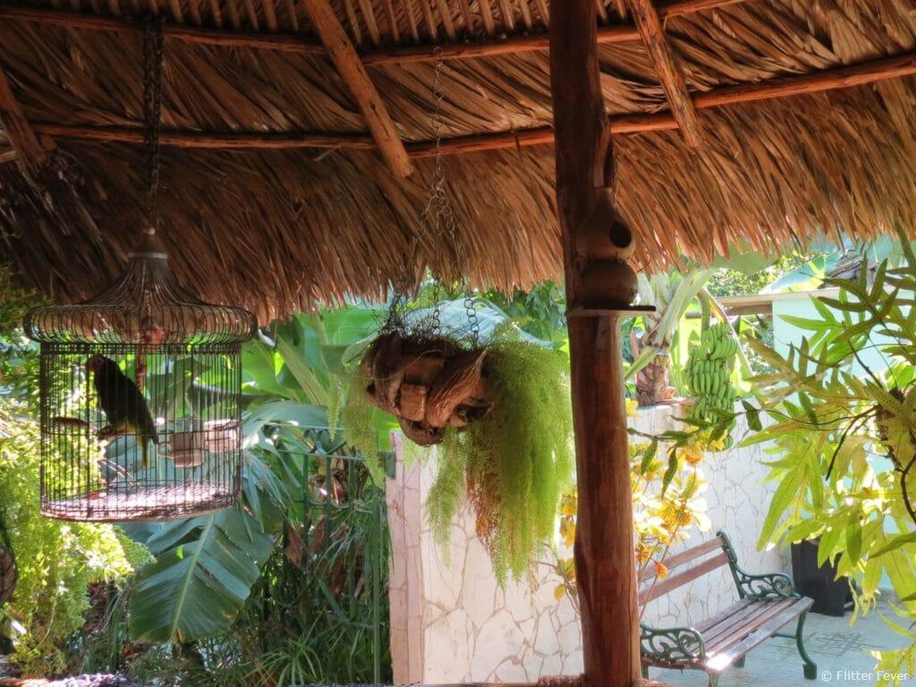 Patio Casa Hostal Idael & Dania in Matanzas Cuba