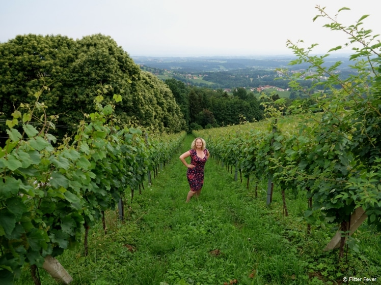 Vineyards in Schilcherland, Austria