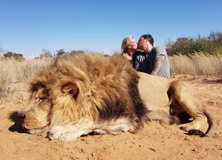 Unethical tourism trophy hunting of endangered wildlife in Africa