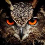 Der hungrige Falke