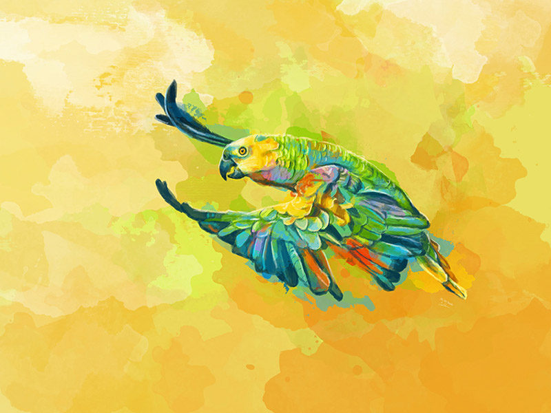 Parrot Commission Digital Art