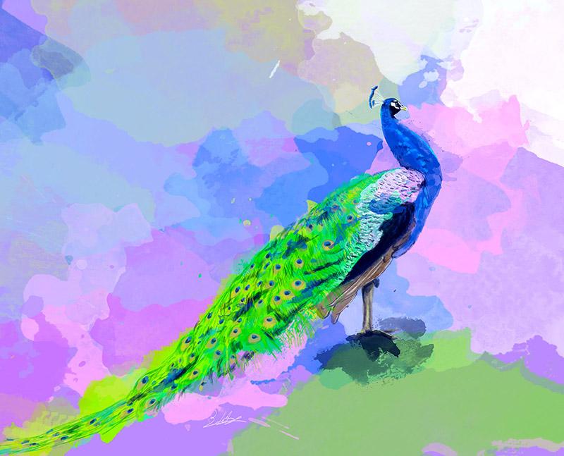 Peacock Dream Digital Art
