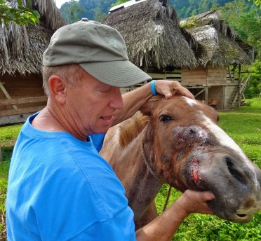 Dr. Dan Examines A Horse With Cellulitis