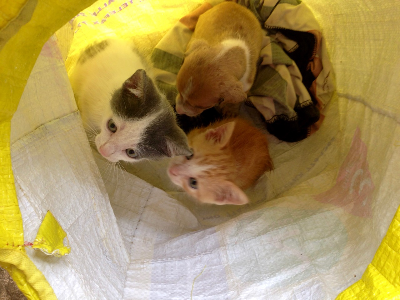A Common Presentation To Veterinarians With Us...the Bag O' Kittens