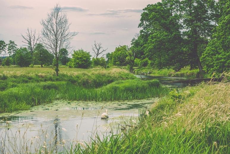 Podróżowanie lokalnie – Rogaliński Park Krajobrazowy