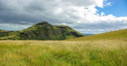 Arthur's Seat and a meadow wit thistles