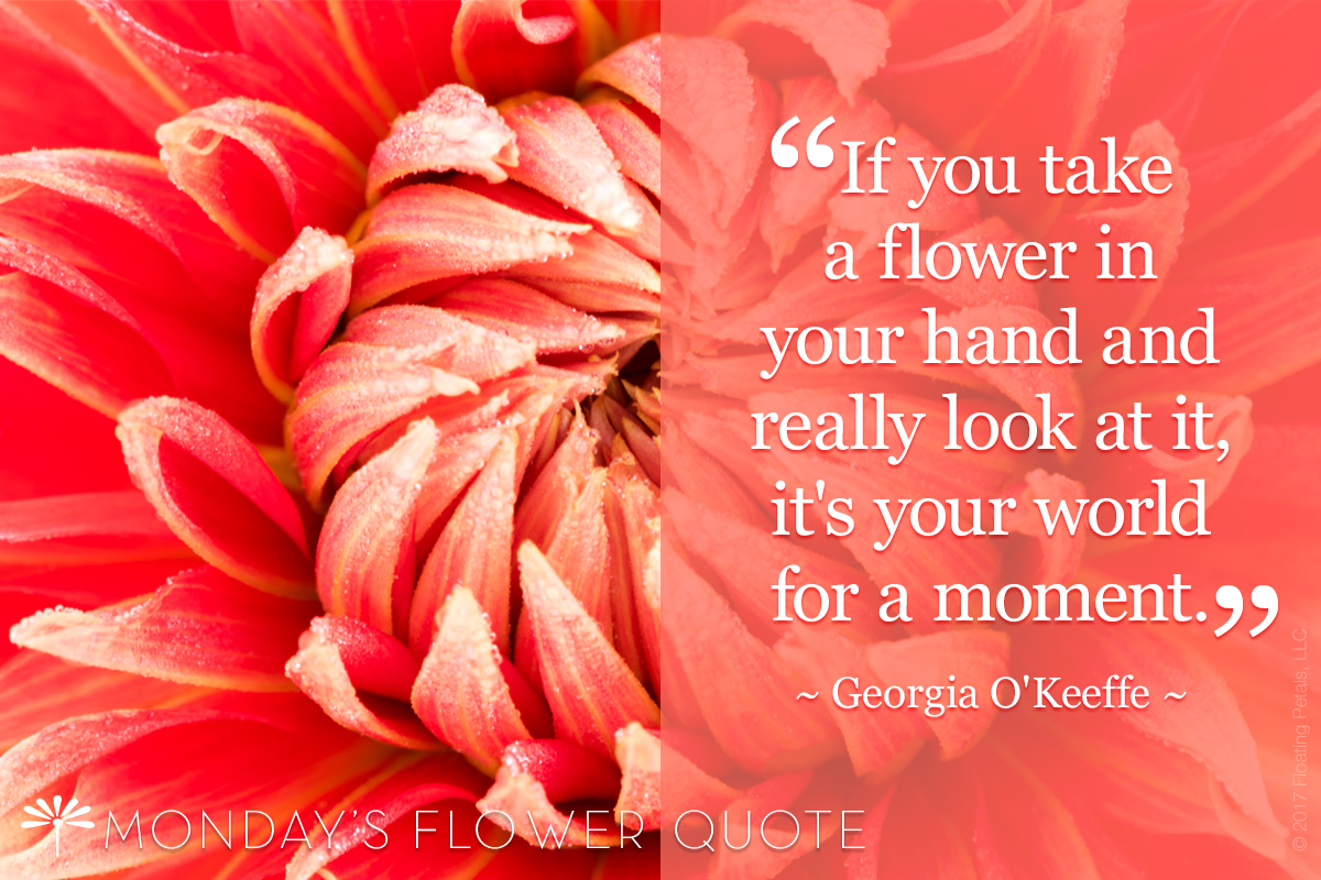 Take A Flower In Your Hand   Floating Petals Monday's Flower Quote