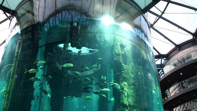 Aquarium-In-Radisson-Sas-Hotel-6