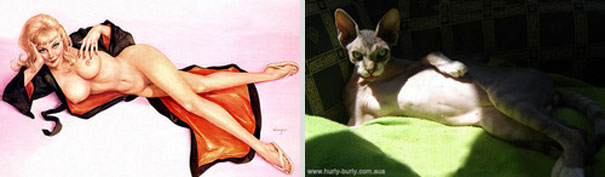 cats-that-look-like-pin-up-girls-12