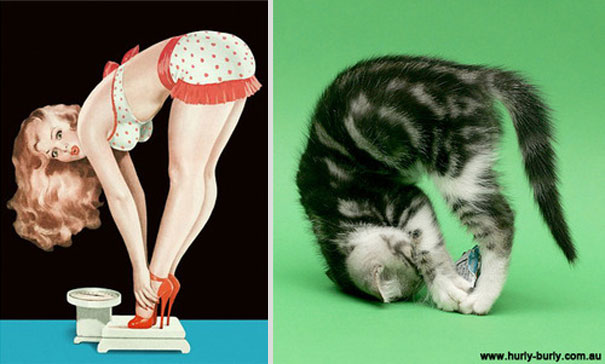 cats-that-look-like-pin-up-girls-16