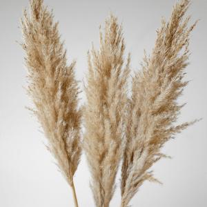 Trio Pampas Grass Regular 1150PR