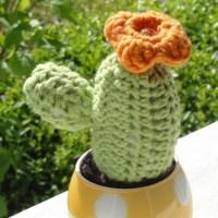 Der Ganzjahres-Kaktus