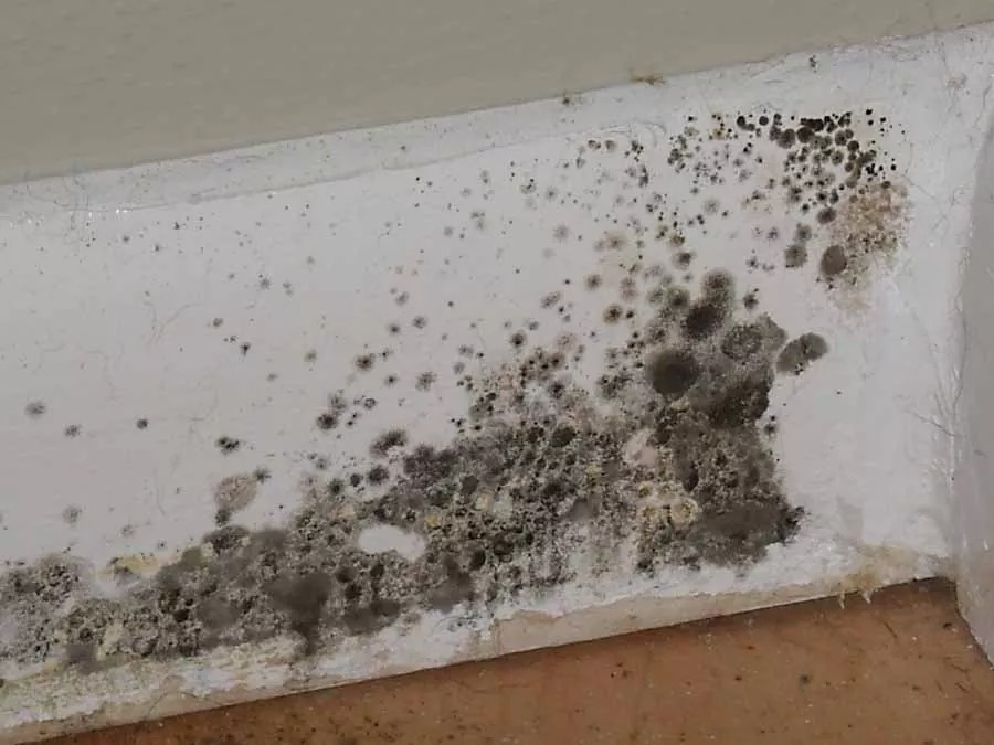 Effective mold removal techniques and prevention tips