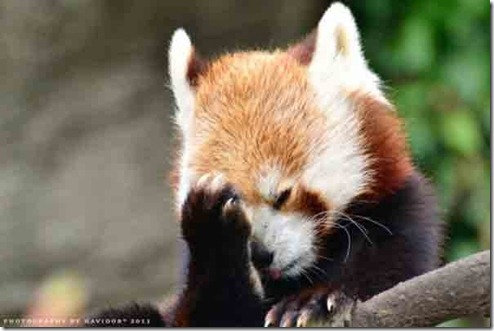 Cute Baby Facebook Wallpaper Animal Facepalms Floofy Times