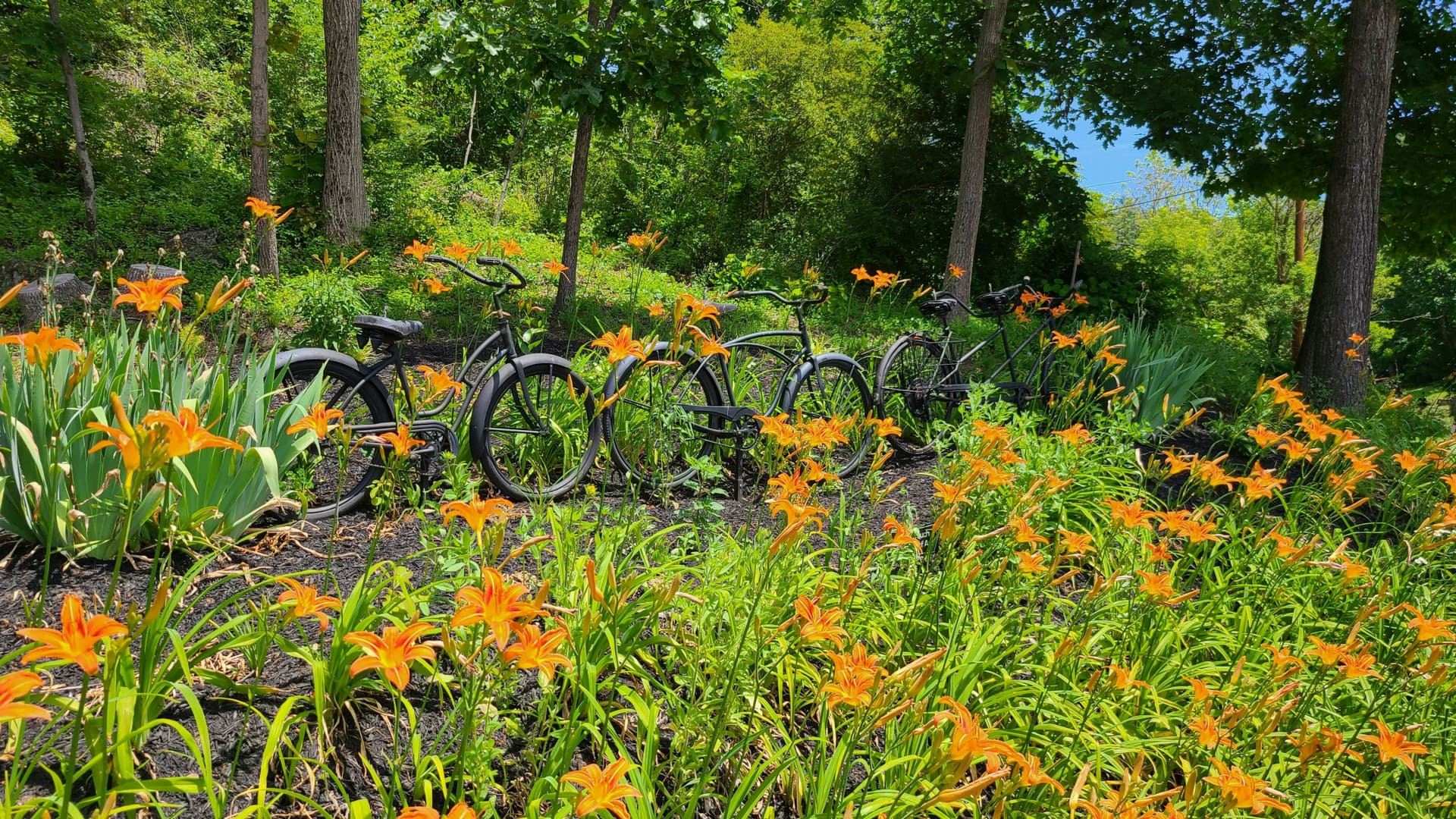 A line of rusty-looking bikes is staged as an art installation halfway up a hill