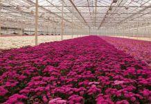 Nuevos productos fitosanitarios para el sector floricultor