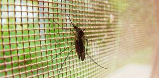 El desafío de la ventilación y los insectos en los invernaderos