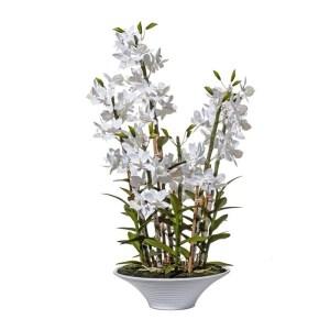 Orchidée Alexe
