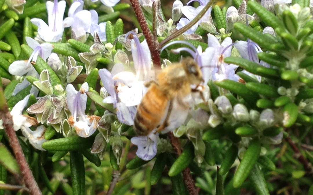 What a Leader Can Learn From Beekeeping