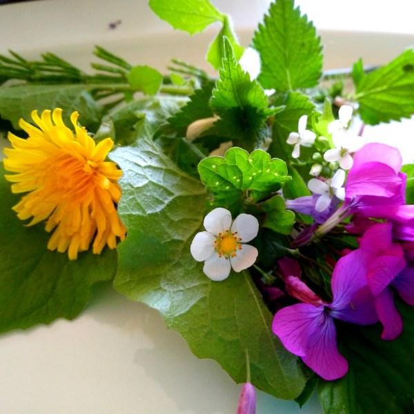 Aanbieding online cursus Eetbare Wilde Planten