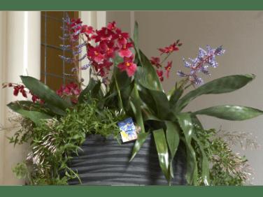 Dendrobium orchids and Guzmania