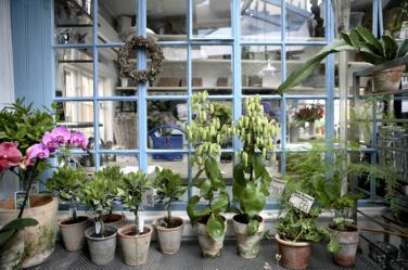 Interior of Martin's Flower-stand