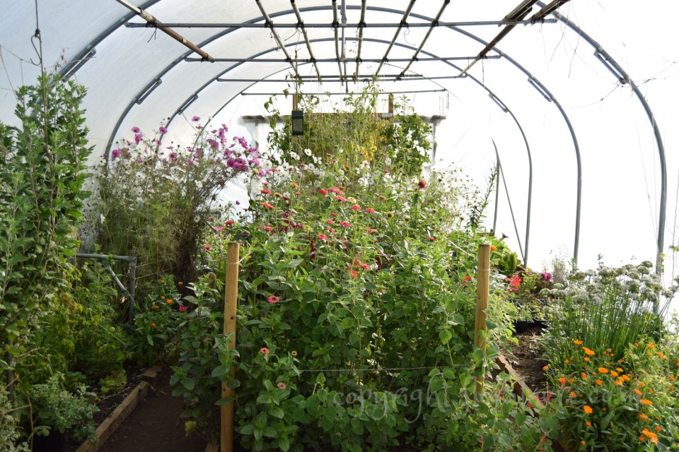 Poly tunnel in October