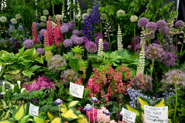 Bloom'in Brilliant - Bloom in the Park 2016 Floralesque 2