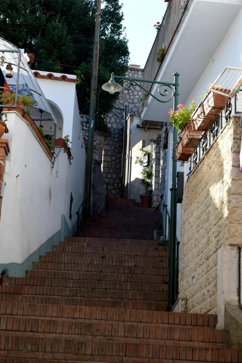 Capri In a Day What to Do and See Floralesque