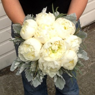 bridal bouquet of all white peonies, dusty miller and wispy eucalyptus