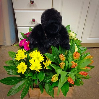 Gorilla amongst the flowers - front view