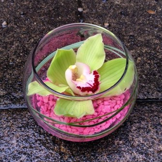 Green cymbidium orchid bowl with pink gravel