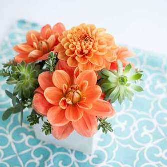 small orange dahlias & succulents centerpiece