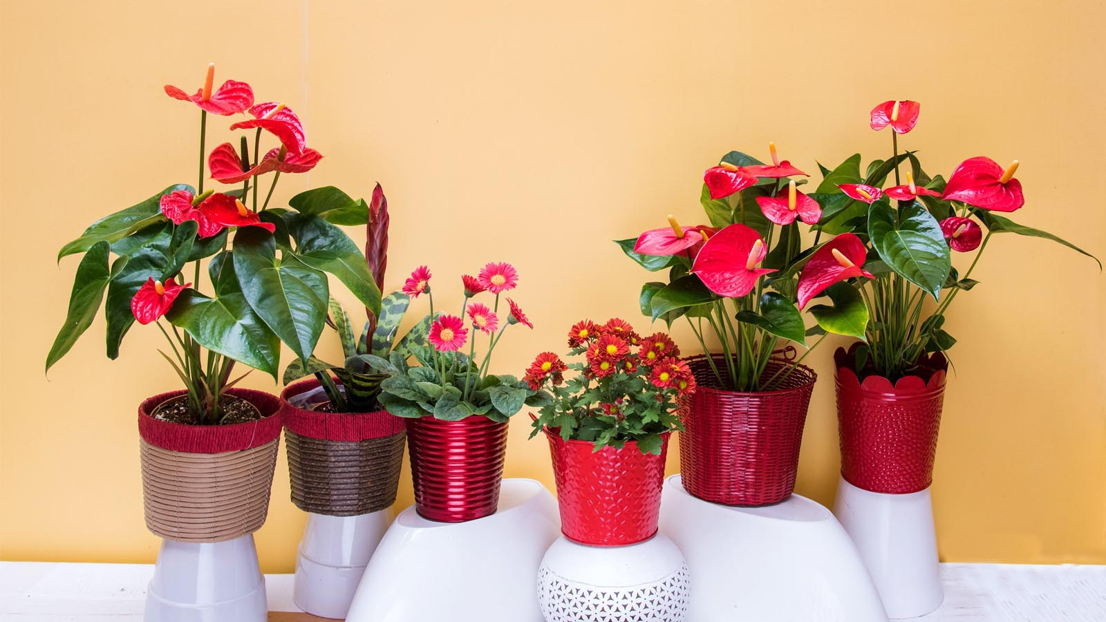 Florance Flora - India's leading Floriculture products company since 1980