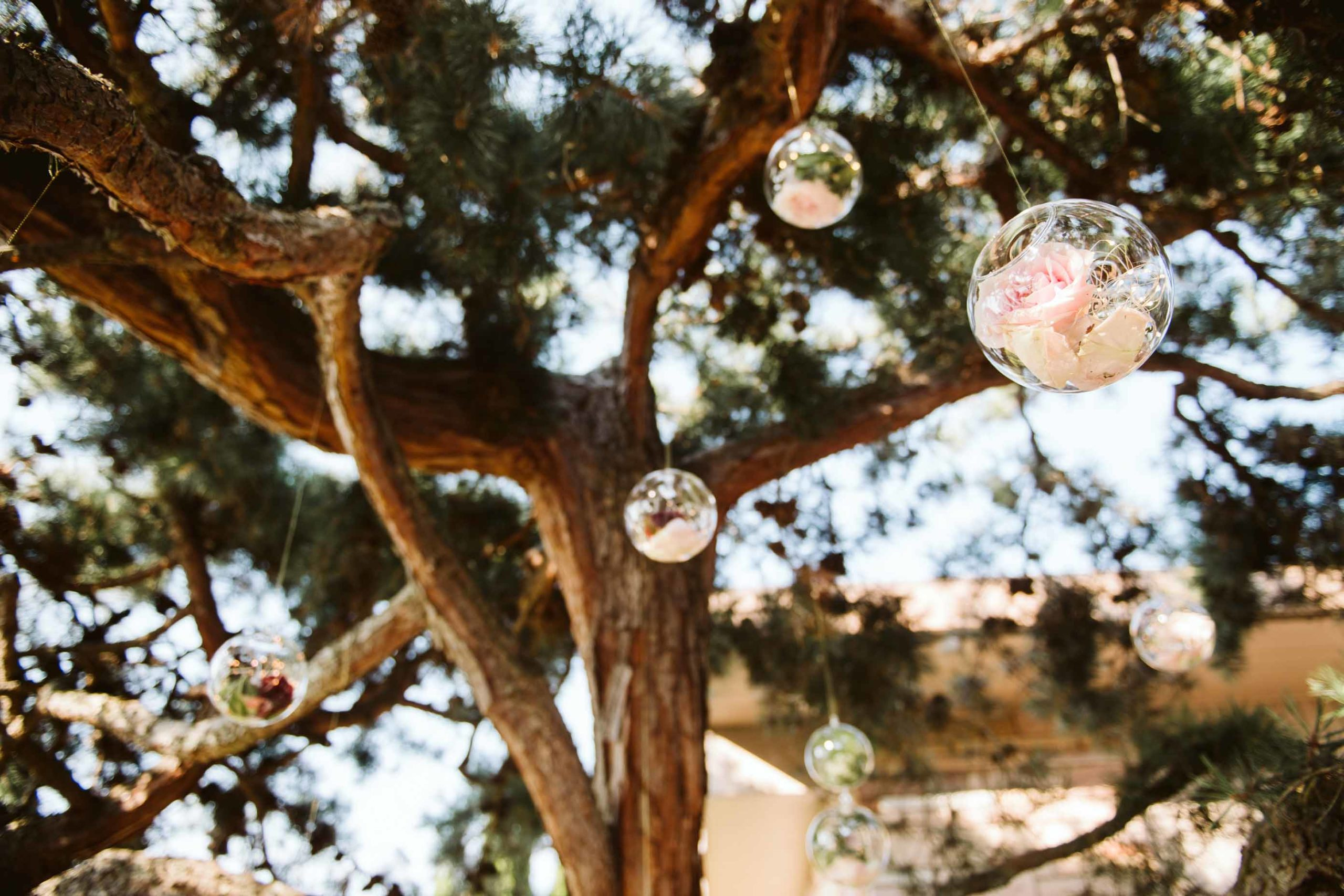 Round glass globes filled with fairy lights and roses suspended in a tree for a backyard wedding.