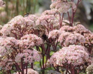 Konténeres dísznövények ültetése 10+1 lépésben 2