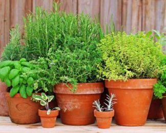 Gyógy- és fűszernövények