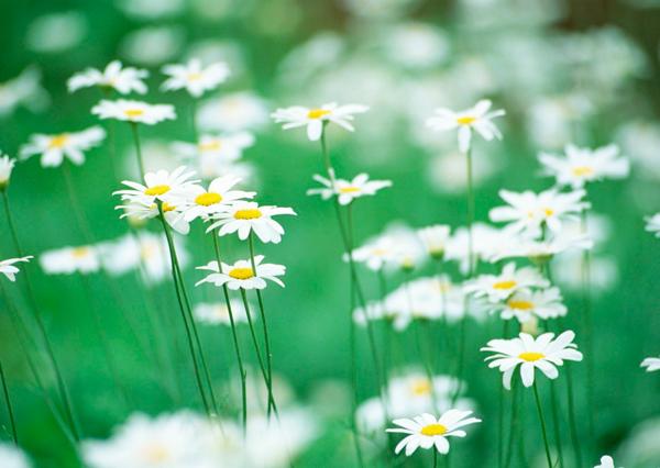Комнатные цветы для козерога. Знак зодиака козерог цветы