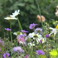 Une jardinière en Belgique : Isabelle