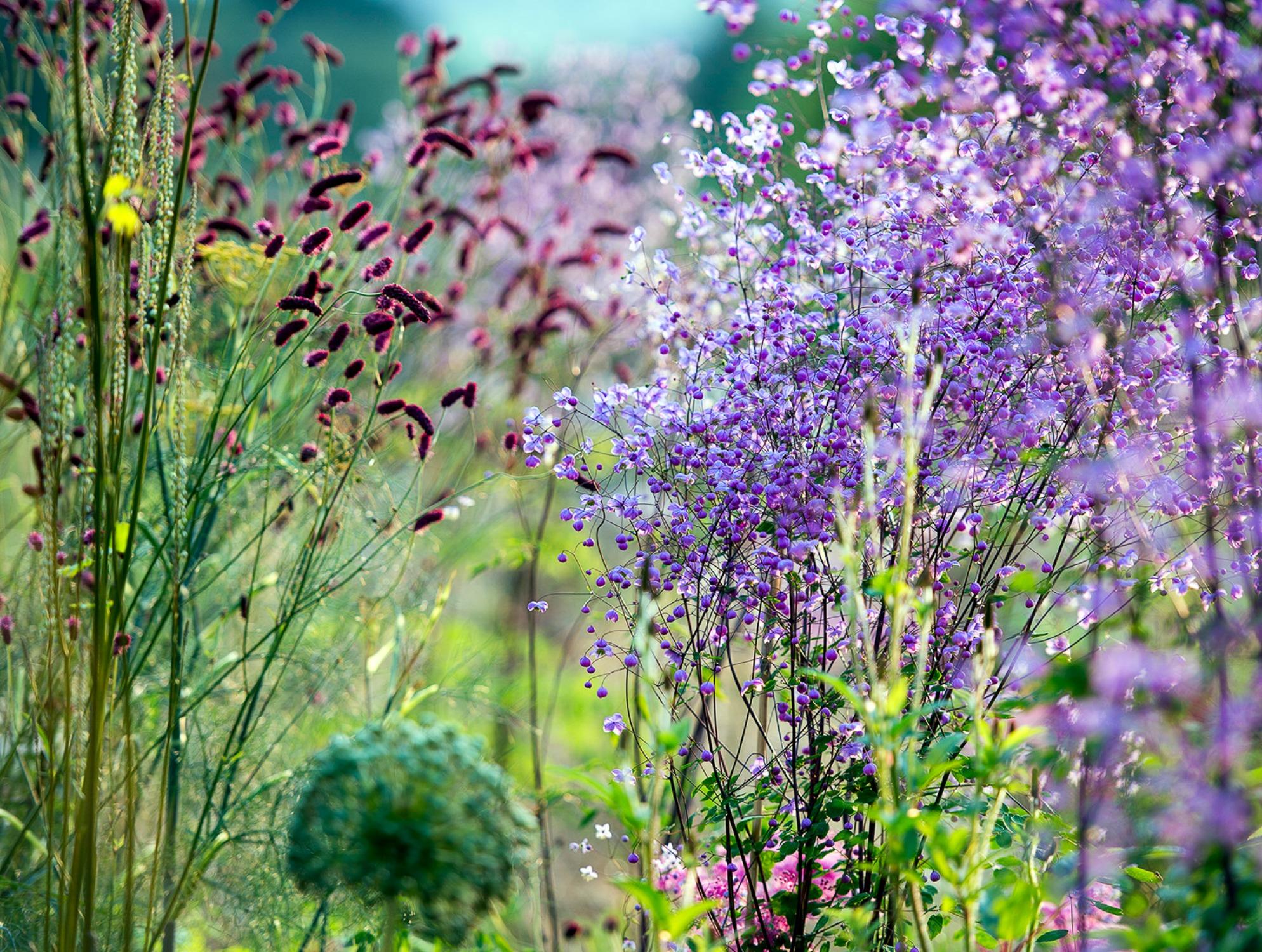 Hunting Brook Gardens – A bird's eye view!